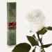 Долгосвежая роза Белый Бриллиант в подарочной упаковке (не вянут от 6 месяцев до 5 лет)