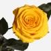 Три долгосвежих розы Золотистый Хризоберилл в подарочной упаковке (не вянут от 6 месяцев до 5 лет)