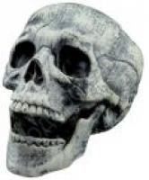 Бутафорский Череп с подвижной челюстью