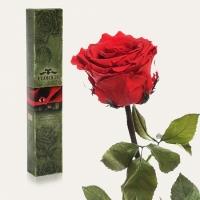 Долгосвежая роза Алый Рубин 7 карат (короткий стебель)