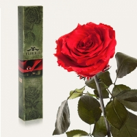 Долгосвежая роза Красный Рубин 5 карат