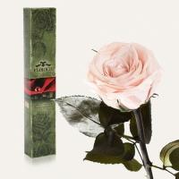 Долгосвежая роза Розовый Жемчуг 5 карат на коротком стебле