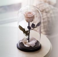 Роза в Колбе Белый Бриллиант 5 карат