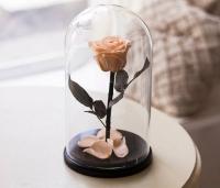 Роза в Колбе Розовый Жемчуг 7 карат