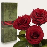Фото Три долгосвежих розы Багровый Гранат 7 карат (средний стебель)