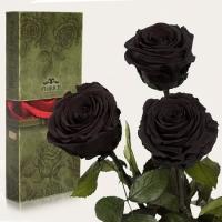Три долгосвежих розы Черный Бриллиант 7 карат (средний стебель)