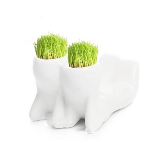 Фото - Керамический горшочек настольный с семенами 1.1 купить в киеве на подарок, цена, отзывы