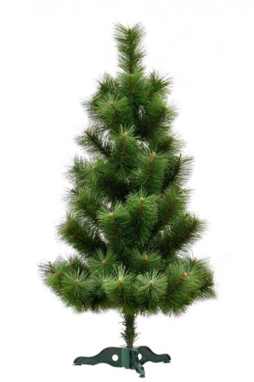 Фото - Сосна Микс высотой 1.20 м купить в киеве на подарок, цена, отзывы