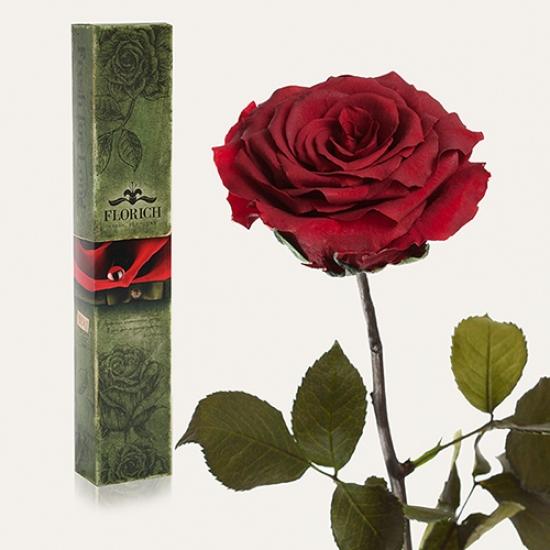 Фото - Долгосвежая роза Багровый Гранат в подарочной упаковке (не вянут от 6 месяцев до 5 лет) купить в киеве на подарок, цена, отзывы