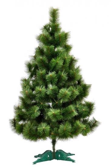 Фото - Сосна Микс высотой 1.50 м купить в киеве на подарок, цена, отзывы