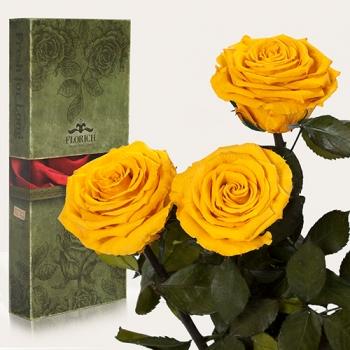 Фото - Три долгосвежих розы Золотистый Хризоберилл в подарочной упаковке (не вянут от 6 месяцев до 5 лет) купить в киеве на подарок, цена, отзывы