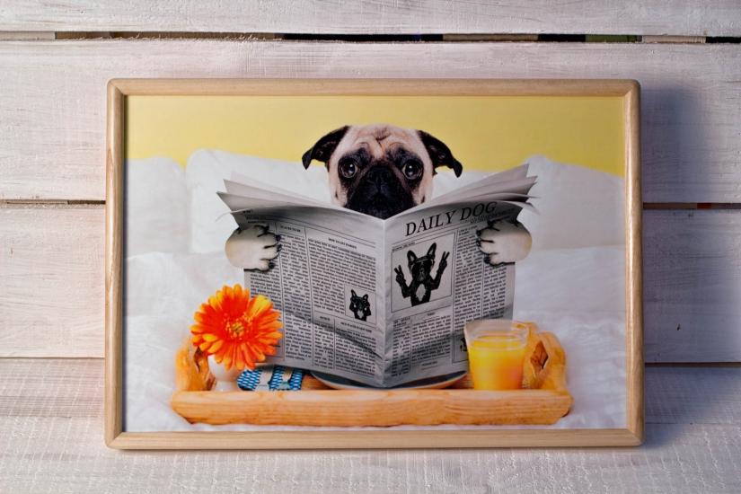 Фото - Поднос с подушкой Пикинес  купить в киеве на подарок, цена, отзывы