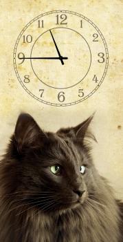 Фото - Часы на холсте Кошка 25х50 купить в киеве на подарок, цена, отзывы