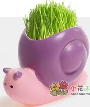 Фото - Травянчик с семенами Улитка купить в киеве на подарок, цена, отзывы