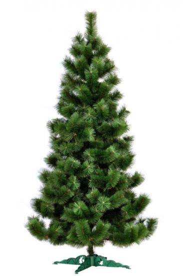 Фото - Сосна Микс высотой 2.20 м купить в киеве на подарок, цена, отзывы