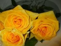 фото 1880  Три долгосвежих розы Золотистый Хризоберилл в подарочной упаковке (не вянут от 6 месяцев до 5 лет) цена, отзывы