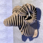 купить Интерьерная голова овна 3D пазл цена, отзывы
