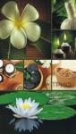 купить СПА-оборудование Цветок Лотоса цена, отзывы