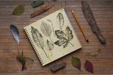 купить Альбом для рисования Ботаника 40 л цена, отзывы