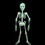 купить Скелет-конструктор светонакопительный средний цена, отзывы