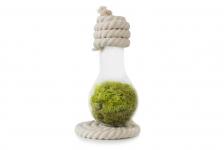 купить Флорариум в лампочке на плоской подставке из скрученного каната 500 мл цена, отзывы