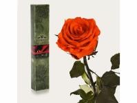 купить Долгосвежая роза Огненный янтарь 5 карат на коротком стебле цена, отзывы