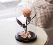 купить Роза в Колбе Розовый Жемчуг 5 карат цена, отзывы