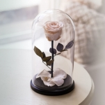 купить Роза в Колбе Белый Бриллиант 5 карат цена, отзывы