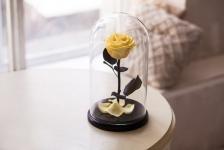 купить Роза в Колбе Желтый Топаз 5 карат цена, отзывы