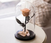 купить Роза в Колбе Розовый Жемчуг 7 карат цена, отзывы
