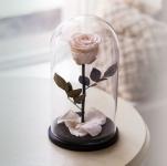 купить Роза в Колбе Белый Бриллиант 7 карат цена, отзывы