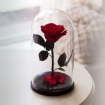купить Роза в Колбе Алый Рубин 7 карат цена, отзывы