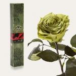 купить Долгосвежая роза Лаймовый Нефрит 5 карат на коротком стебле цена, отзывы