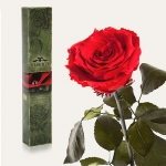 купить Долгосвежая роза Красный Рубин 5 карат цена, отзывы