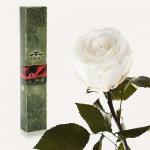 купить Долгосвежая роза Белый Бриллиант 5 карат на коротком цена, отзывы