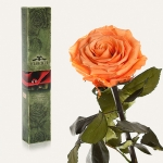 купить Долгосвежая роза Золотистый Хризоберилл 7 карат (короткий стебель) цена, отзывы