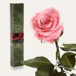 купить Долгосвежая роза Розовый Кварц 7 карат (короткий стебель) цена, отзывы