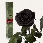 купить Долгосвежая роза Черный Бриллиант 7 карат (средний стебель) цена, отзывы
