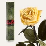 купить Долгосвежая роза Желтый Топаз 7 карат (средний стебель) цена, отзывы