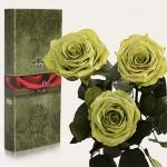 купить Три долгосвежих розы Лаймовый Нефрит 5 карат (короткий стебель) цена, отзывы