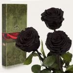 купить Три долгосвежих розы Черный Бриллиант 7 карат (средний стебель) цена, отзывы