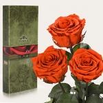 купить Три долгосвежих розы Огненый Янтарь 7 карат (средний стебель) цена, отзывы