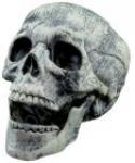 купить Бутафорский Череп с подвижной челюстью цена, отзывы