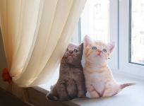 фото 3628  Подушка Кошки цена, отзывы