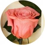 фото 1823  Долгосвежая роза Розовый Кварц в подарочной упаковке (не вянут от 6 месяцев до 5 лет) цена, отзывы