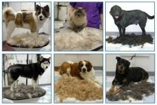 фото 1264  Фурминатор для кошек и собак 4,5 см  цена, отзывы