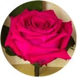фото 1889  Три долгосвежих розы Малиновый Родолит в подарочной упаковке (не вянут от 6 месяцев до 5 лет) цена, отзывы