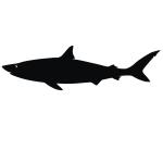 фото 3532  Наклейка Акула мал цена, отзывы