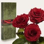 купить Три долгосвежих розы Багровый Гранат 5 карат на коротком стебле цена, отзывы