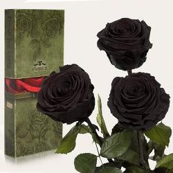 купить Три долгосвежих розы Черный Бриллиант в подарочной упаковке (не вянут от 6 месяцев до 5 лет) цена, отзывы